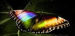 هولوگرام رنگین کمان (Rainbow Holograms)